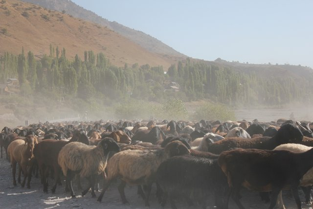 Herds movement and roaming at different altitude/watershed zone