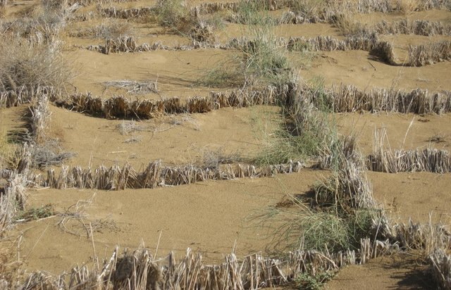 Stabilization and afforestation of sand dunes around settlements in the Karakum Desert (CACILM)