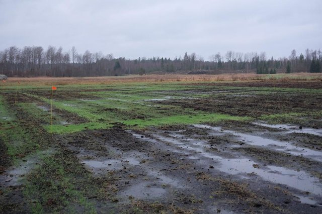 Using water tolerant crops on cultivated peat soils, Recare