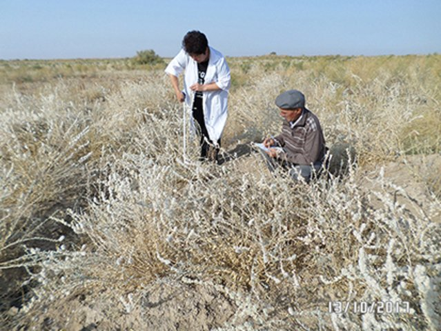 Creation of improved autumn-winter pastures in the foothill zone of Uzbekistan