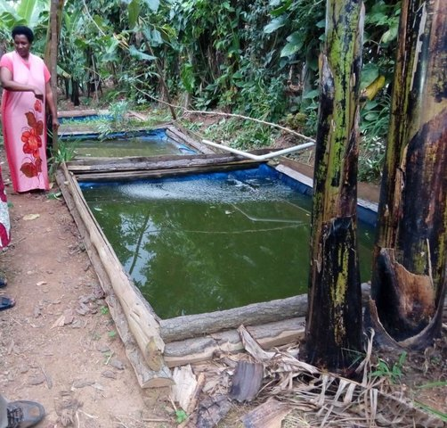 Backyard fish farming in tarpaulin ponds for improved livelihood
