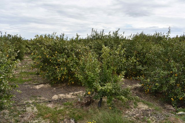 Promoting Sustainable Agriculture in Citrus Orchards