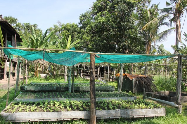 Cultivation of organic vegetables to improve the household economy and the soil quality
