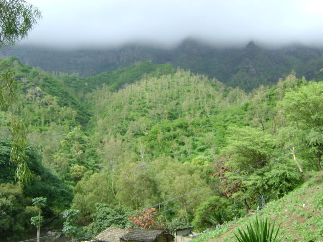 Forest area in the mountains with several species: Eucalyptus spp., Dichrostachys cinerea and Lantana camara on steep slopes.