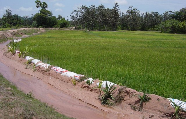 Stabilisation of irrigation channels in sandy soils with old rice bags and Pandanus plants