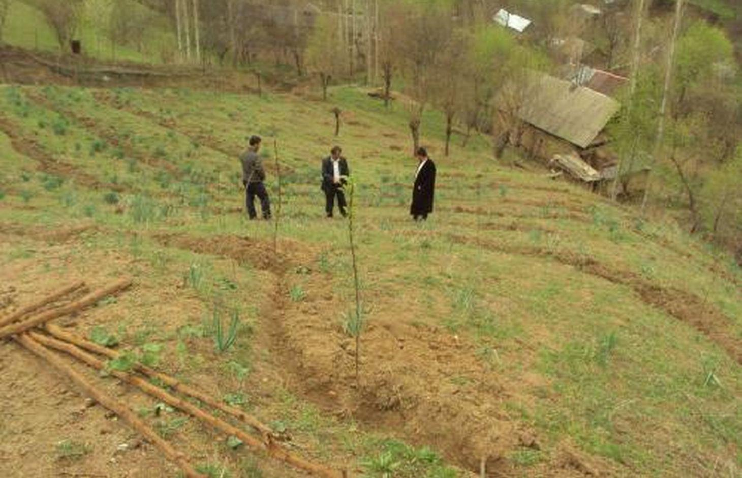 Planting of fruit trees on a steep slope above the village settlement.
