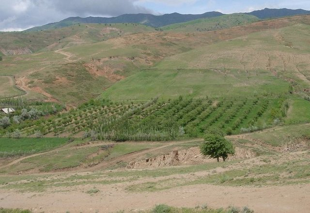 Orchard-based Agroforestry (establishment of orchard)