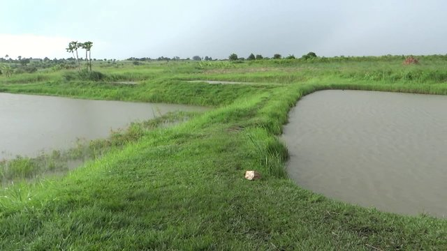 Ground water fed fish ponds