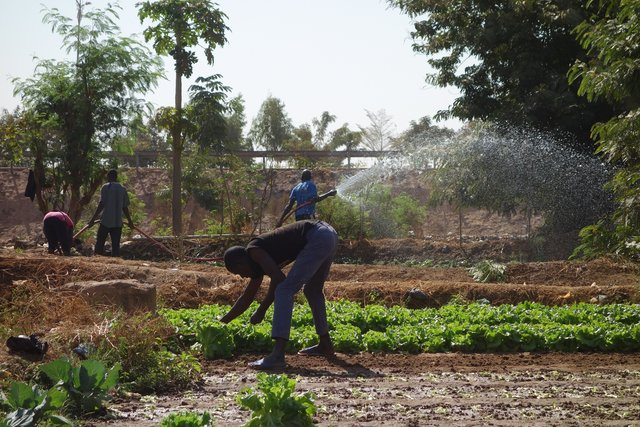 Production de légumes à Boulmiougou