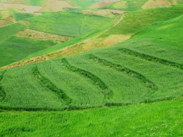Terraces with improved seed and fertilizer application