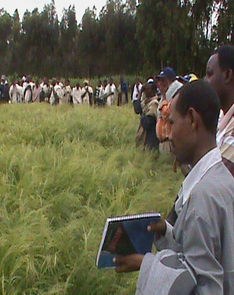 REG members and researchers and extension staff were visiting demonstration sites of improved Teff varieties