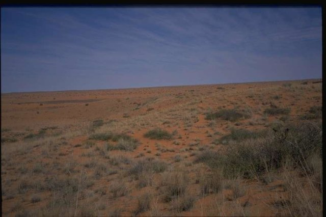 Rehabilitation techniques in southern Kalahari - Vegetative and Management