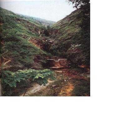 Pattern of Check Dam in a gully.