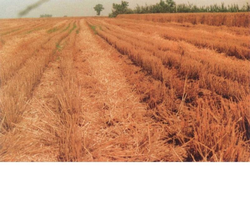 Leaving residual(wheat straw) when harvest for mulching.