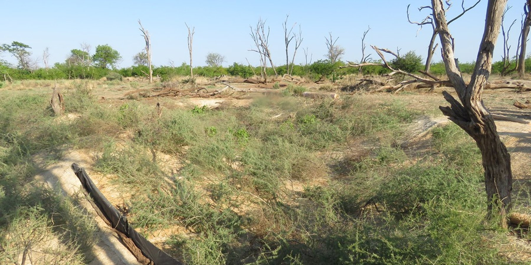 Rehabilitation of gully erosion in the Mapungubwe National Park in South Africa