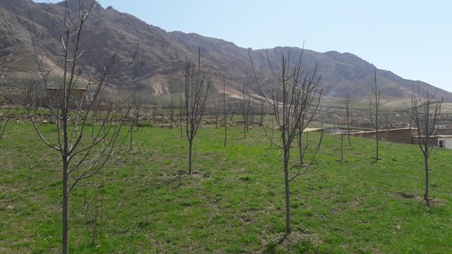 Establishment of improved orchards and vineyards