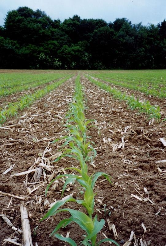 Non-inversion tillage and crop residues.