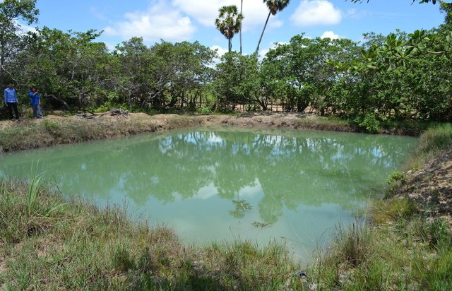 Use of household ponds for garden irrigation and fish production.