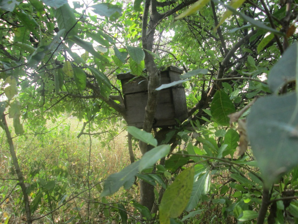 Photo showing Modern Bee Hives based Apiculture in Northern Uganda