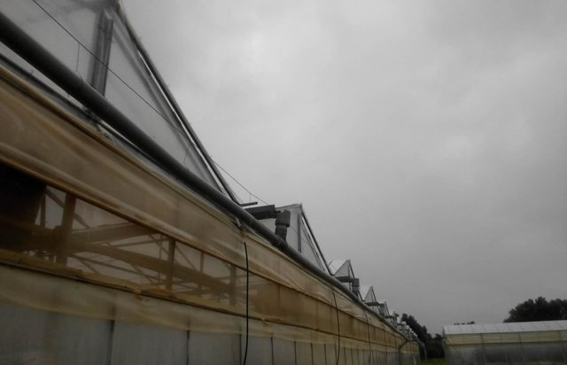 Rainwater harvesting for greenhouse irrigation