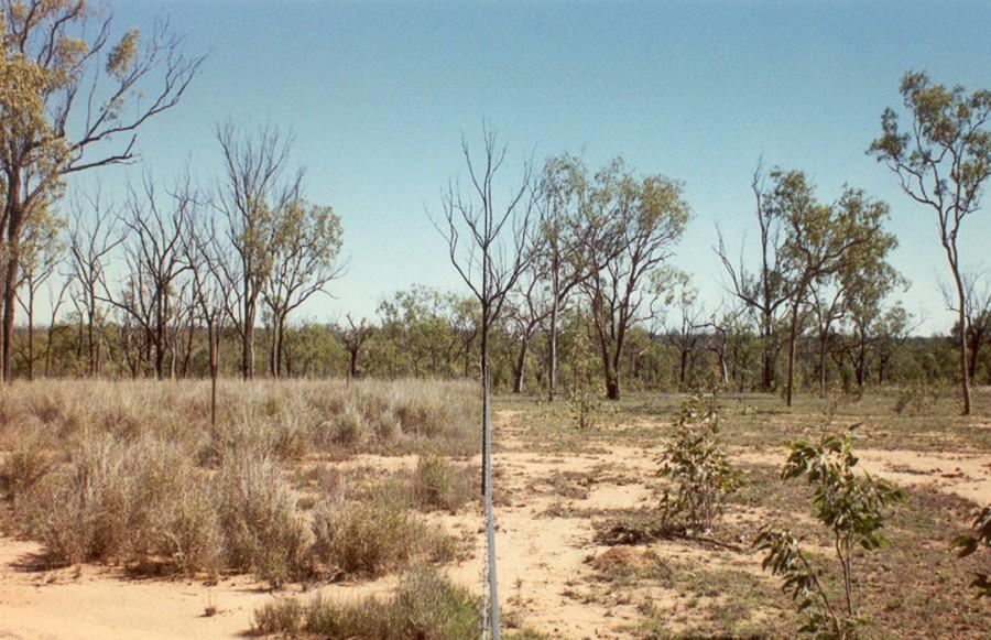 Fence-line contrast between treatment paddocks with different utilisation rates: medium utilisation on the left and high utilisation paddock on the right.