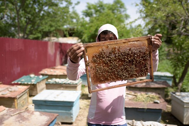 Improving productivity of fruit trees  through development beekeeping sector