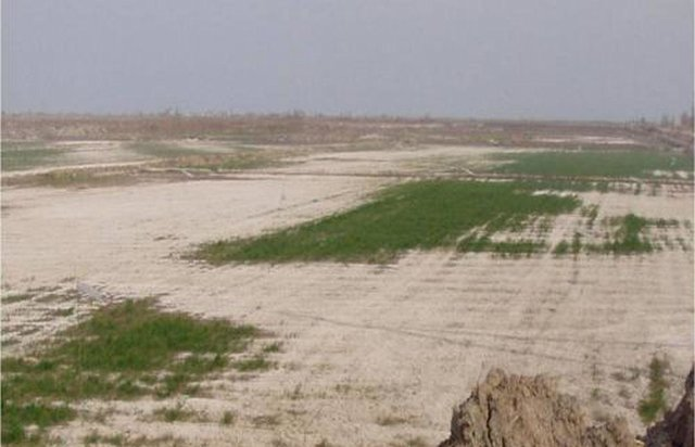 Afforestation for rehabilitation of degraded irrigated croplands (CACILM)