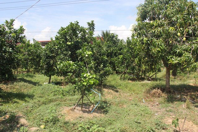 Improved orchard with an integrated farming system