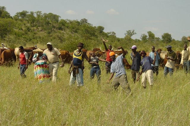 Community grazing management