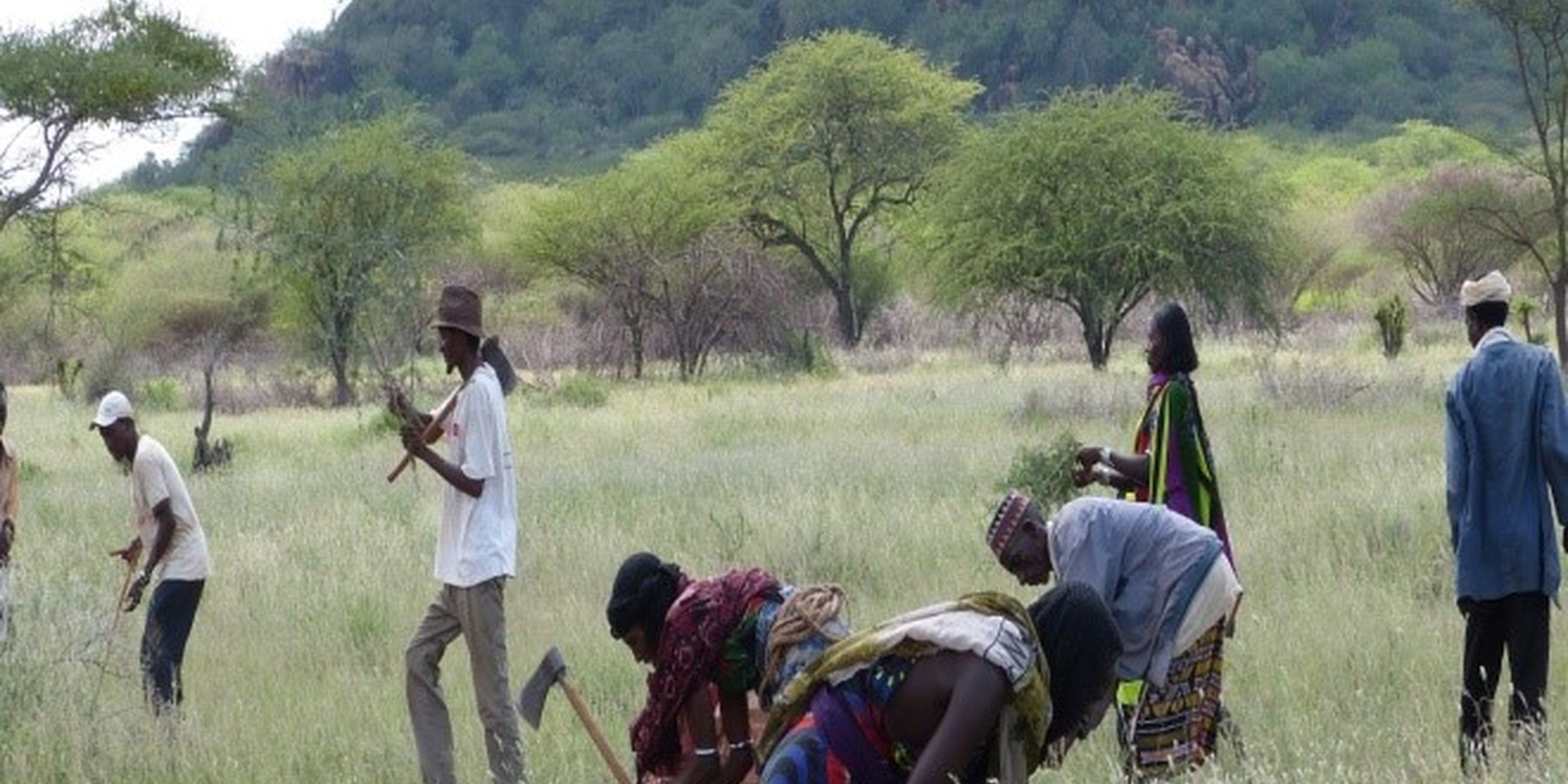 Pastoralist field schools (PFS) members working to improve their pasture land.