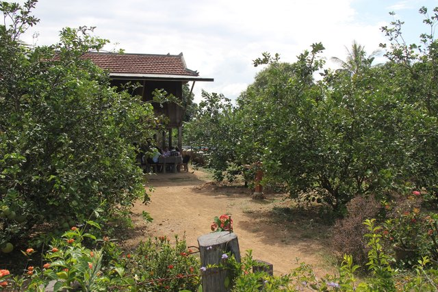 Home Garden (Pomelo, Lemon, Supplementary Crops)