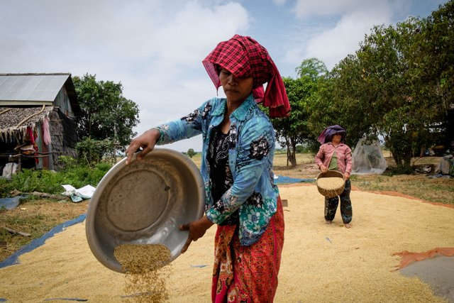 Community Safety Nets - Establishment of rice seed banks at village level