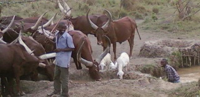 Livestock keepers initiative for continued dry season animal drinking water supply