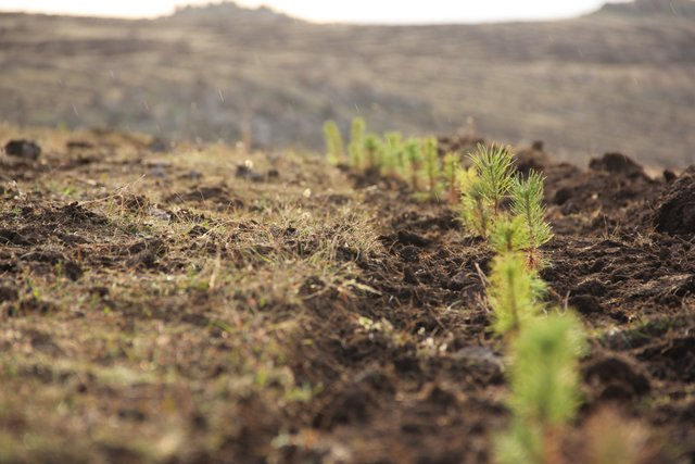 High-altitude afforestation for erosion control