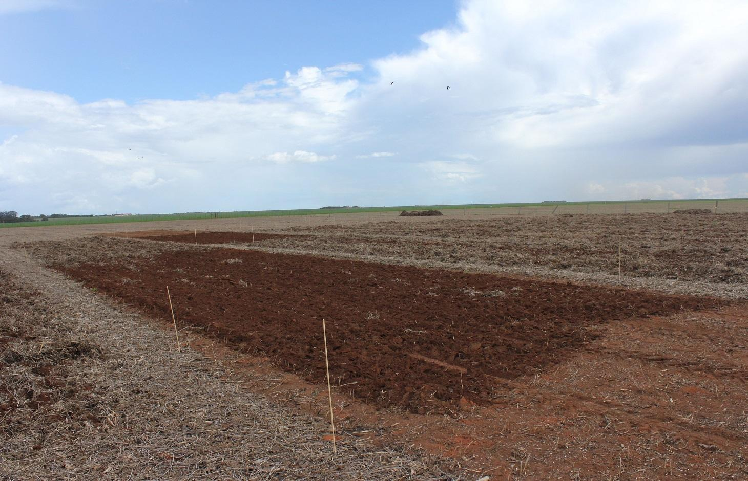 Experimental plots on a tropical agricultural soil (a ferrasol) after organic matter additions.