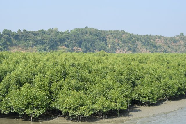 Afforestation with mangrove plants to protect land degradation