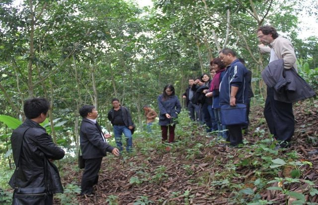 Scientist-practitioner communication for sustainable rubber cultivation in China