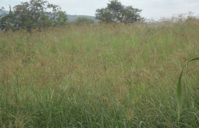 Improved fodder production on degraded pastureland