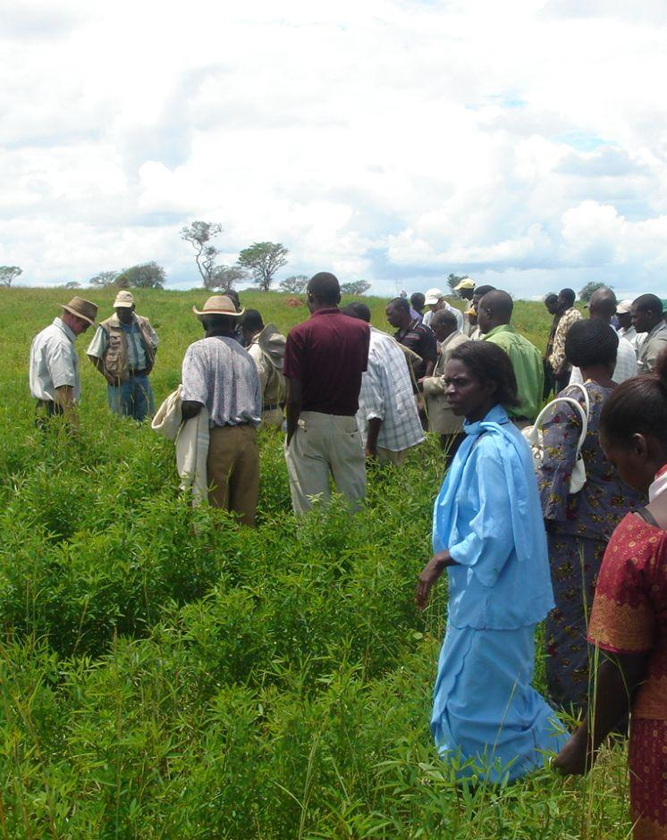 Discussing the performance of the Magoye Planter with a test farmer in a field planted with the same